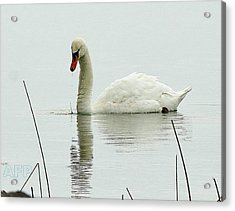 Acrylic Print featuring the photograph Silent Water by Al Fritz