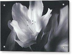 Silent Whisper Acrylic Print by Maria  Wall