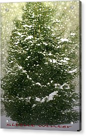 Silent Winter Acrylic Print by Debra     Vatalaro