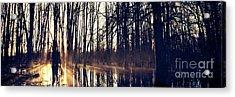 Silent Woods #4 Acrylic Print