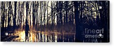 Silent Woods No 4 Acrylic Print