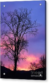 Acrylic Print featuring the photograph Silhouette At Dawn by Larry Ricker