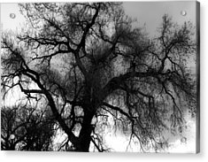 Silhouette Acrylic Print by James BO  Insogna
