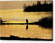 Acrylic Print featuring the photograph Silhouette Of A Grey Or Gray Heron - Ardea Cinerea - In Wetland We by Paul Farnfield