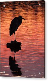 Silhouette Of A Heron Acrylic Print by Matt Dobson