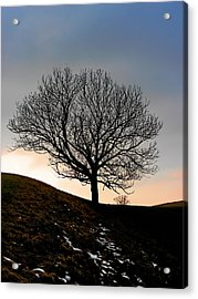 Silhouette Of A Tree On A Winter Day Acrylic Print by Christine Till