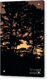 Silhouette Of Forest  Acrylic Print by Erin Paul Donovan