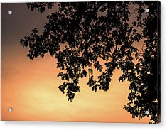 Silhouette Tree In The Dawn Sky Acrylic Print by Jingjits Photography