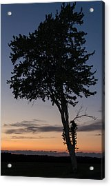 Silhouetted Tree Acrylic Print