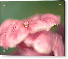 Silk Drop Acrylic Print