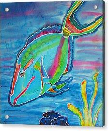 Silk Parrotfish Acrylic Print