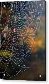 Acrylic Print featuring the photograph Silken Threads by Elsa Marie Santoro