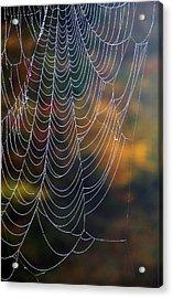 Silken Threads Acrylic Print by Elsa Marie Santoro
