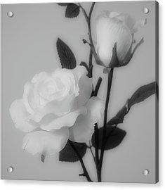 Silken Acrylic Print