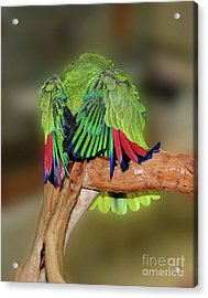Silly Amazon Parrot Acrylic Print by Smilin Eyes  Treasures