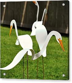 Silly Goose Acrylic Print by JAMART Photography