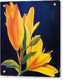 Silly Lily Acrylic Print by Dana Redfern