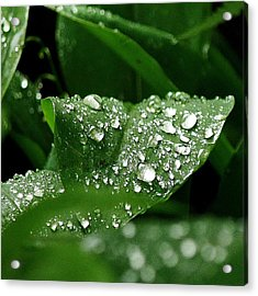 Acrylic Print featuring the photograph Silver Drops Of Spring by Al Fritz