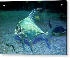 Silver Fish Acrylic Print by Svetlana Sewell