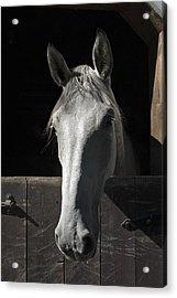 Silver Acrylic Print by Jack Goldberg