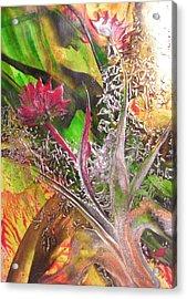 Silver Lace Acrylic Print by John Vandebrooke