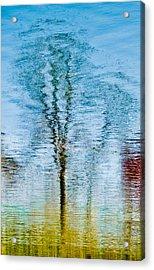 Silver Lake Tree Reflection Acrylic Print