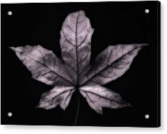 Silver Leaf Acrylic Print by Artecco Fine Art Photography