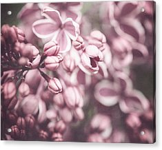 Silver Lilacs Acrylic Print by Lisa Russo