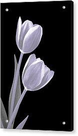 Silver Tulips Acrylic Print