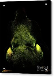 Silverback Gold . Photoart . R7917 Acrylic Print by Wingsdomain Art and Photography