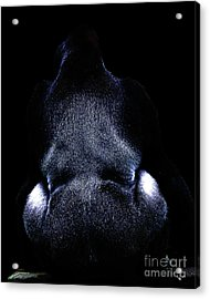 Silverback . Photoart . R7917 Acrylic Print by Wingsdomain Art and Photography
