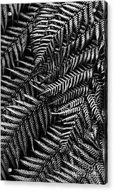 Silvern Acrylic Print