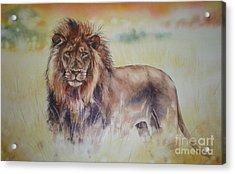 Simba Acrylic Print by Sandra Phryce-Jones