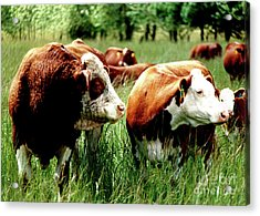 1992 Oregon State University Art About Agriculture Directors Award Winner.  Acrylic Print