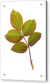 Simple And Beautiful Acrylic Print by Panos Trivoulides