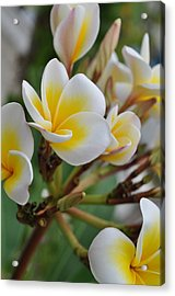 Simple Beauty Acrylic Print by Joe  Burns