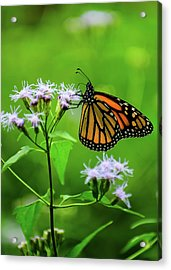 Simple Beauty Acrylic Print