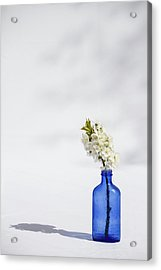 Simple Blue Acrylic Print