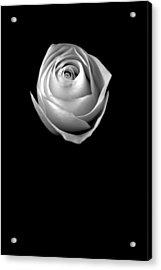 Simple Elegance Acrylic Print by Elsa Marie Santoro