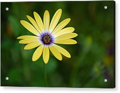 Simple Flower Acrylic Print by Jennifer Englehardt