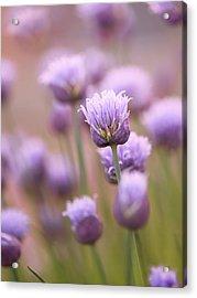 Simple Flowers Acrylic Print