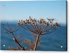 Simple Nature Acrylic Print by Jean Booth