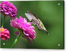 Acrylic Print featuring the photograph Simple Pleasure Hummingbird by Christina Rollo
