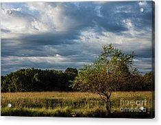 Acrylic Print featuring the photograph Simplicity by Iris Greenwell
