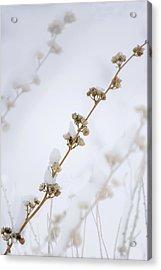 Simplicity Of Winter Acrylic Print