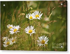 Simplicity Acrylic Print by Sheila Ping