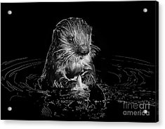 Simply Otter Acrylic Print