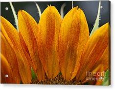 Simply Petals Acrylic Print by Debra Straub