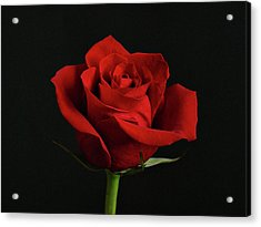 Simply Red Rose Acrylic Print by Sandy Keeton