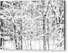 Simply Snowing Acrylic Print by Sue OConnor